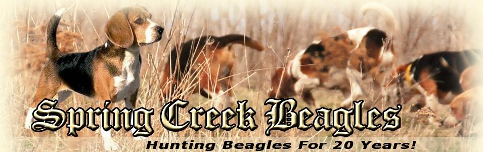 Spring Creek Beagles